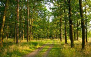 Лесной фонд