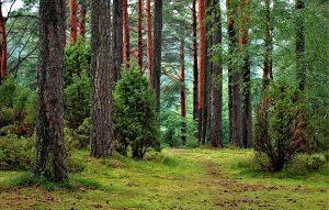 Лес для строительства жилья: алгоритм бесплатного получения