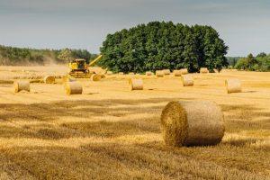 Как арендовать землю под сенокошение и выпас сельскохозяйственных животных