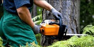 Рубка деревьев на собственном участке: с кем необходимо согласовать действия