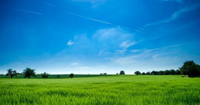 Аренда земли на 49 лет: кто имеет право