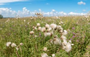 Сорная растительность на участке: могут ли наказать за заросли